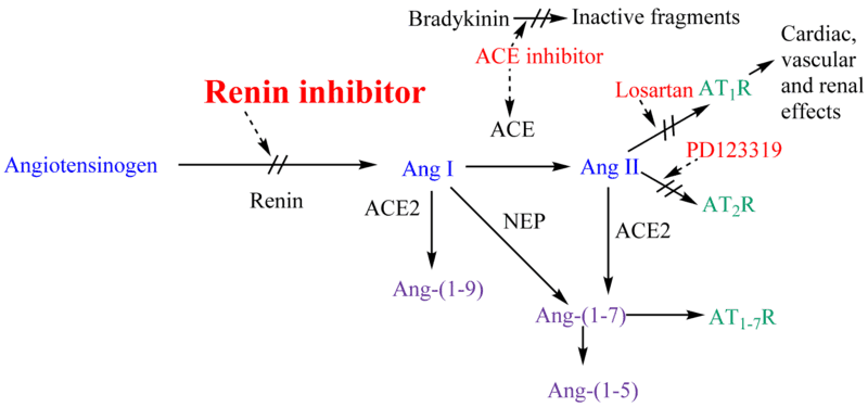 Mechanism of Ace Inhibitors
