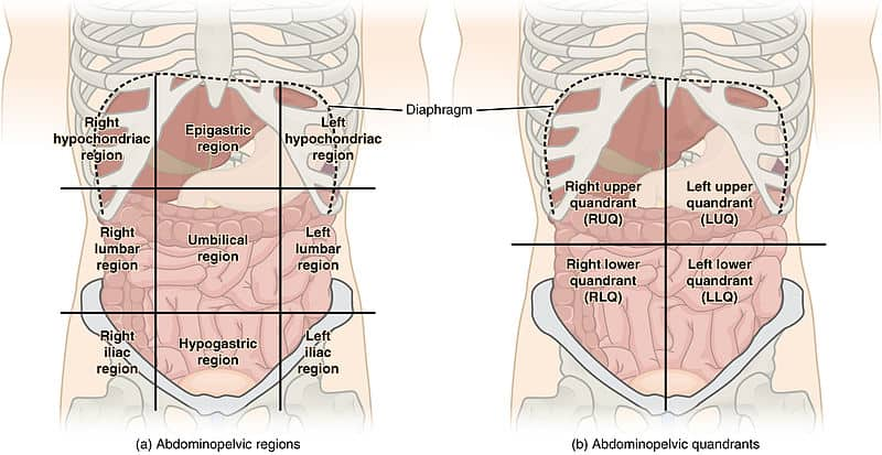 The 9 regions and 4 quadrants of the abdominal examination