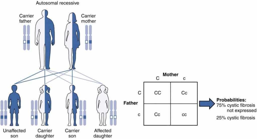 Autosomal Recessive Inheritance