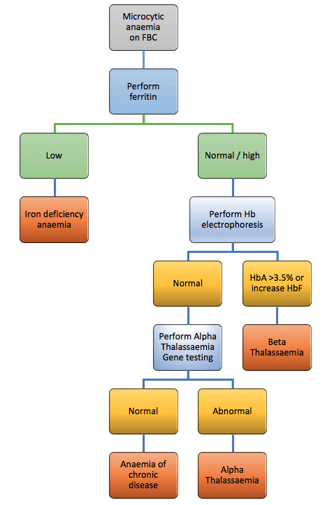 Investigation pathway for microcytic anaemia
